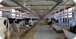 農業・畜産分野